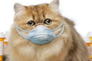 Кошки лечат болезни - правда или миф?