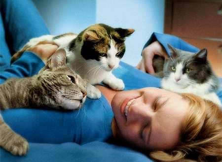 Правда ли, что кошки лечат болезни? кошки лечат болезни