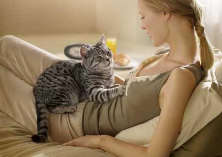 Какие болезни лечат кошки кошки лечат болезни