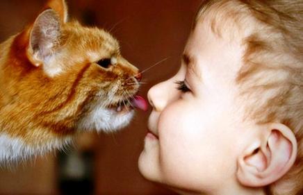 Кошки лечат людей своим мурлыканьем кошки лечат болезни