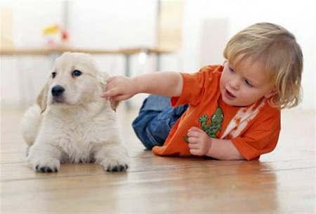 Вопрос, какое домашнее животное лучше завести ребенку? какое домашнее животное лучше завести ребенку