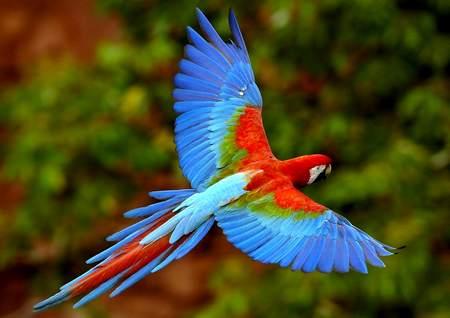 Как животные помогают человеку излечиться или свободу попугаям! как животные помогают человеку излечиться