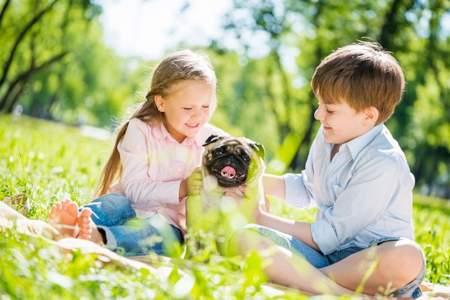 Какого домашнего питомца завести для ребенка какого домашнего питомца завести для ребенка
