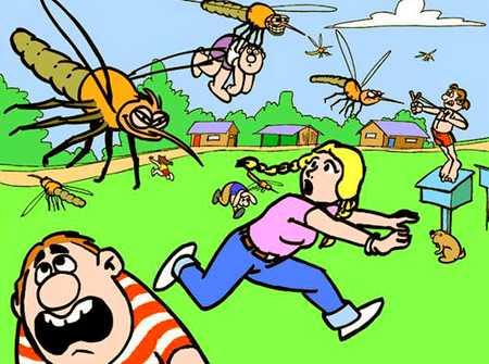Страшнее комара зверя нет немного о насекомых