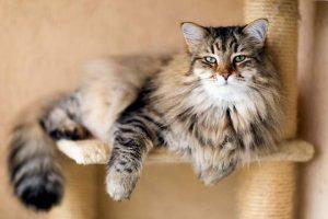 Может ли домашняя кошка заболеть