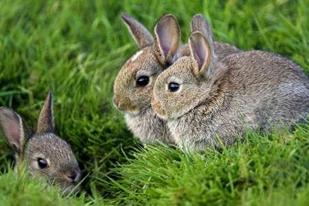 Заводим кроликов кролики это не только ценный мех
