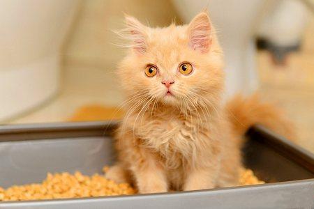 Как приучить кота к туалету туалет для кошек