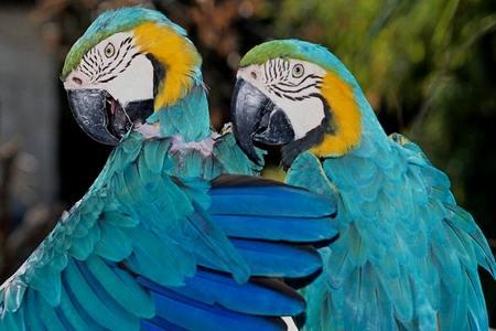 Волнистые попугайчики для ребенка волнистые попугайчики для ребенка