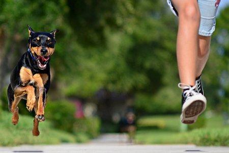 На прогулке к ребенку подбежала собака, и он сильно испугался детские страхи