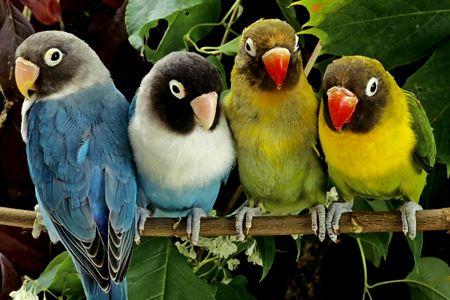 Волнистый попугайчик дома как мы выбирали домашнего питомца