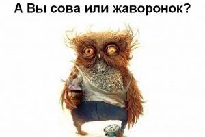 Психотип человека - совы и жаворонки