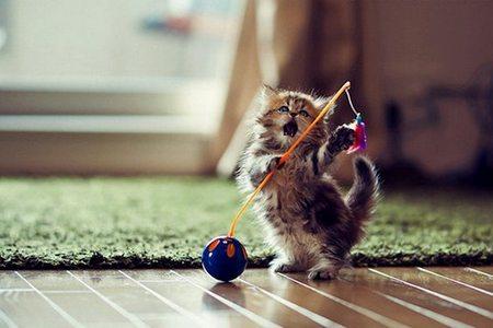 Выбираем игрушки для кошек игрушки для кошек
