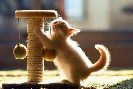 Как приучить котенка к когтеточке Как приучить котенка к когтеточке