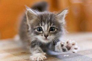 Классные игрушки для кошек