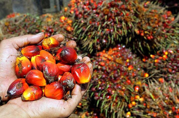 Экзотика под запретом – или как пальмовое масло стало чудом! Экзотика под запретом – или как пальмовое масло стало чудом!
