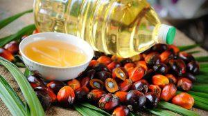 Экзотика под запретом – или как пальмовое масло стало чудом!